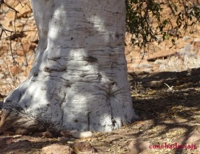 el árbol elefante