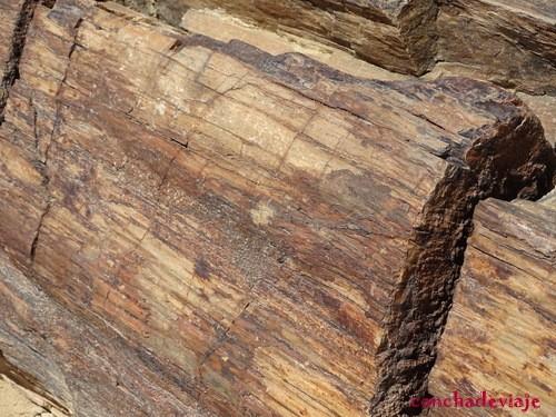 Bosque Petrificado Namibia