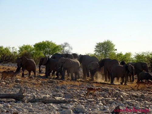 manada de elefantes en carretera