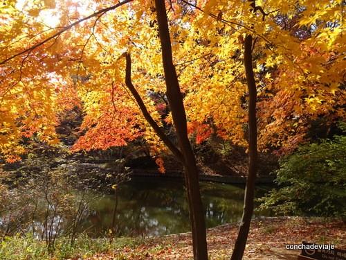 Jardín secreto, palacio de Changdeokgung