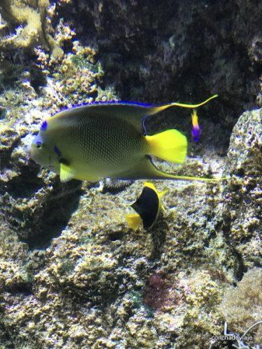 Acuario. Aquarium