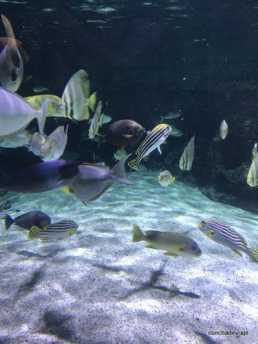 baile de peces en el acuario