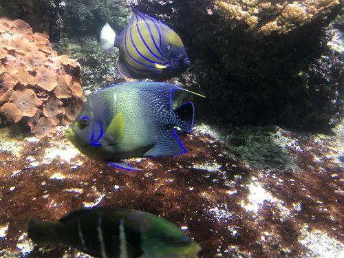 Acuario con peces multicolores