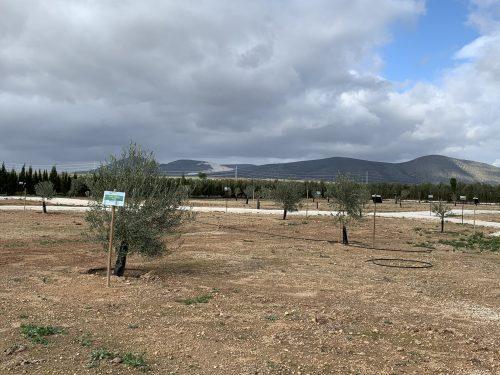 Sierra Sur de Sevilla Casariche