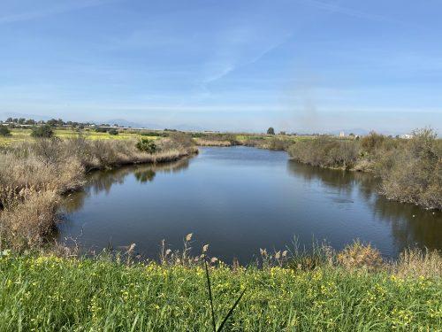 Desembocadura del Guadalhorce, laguna escondida